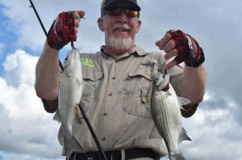 WHITE BASS - THE PEOPLE'S FISH!